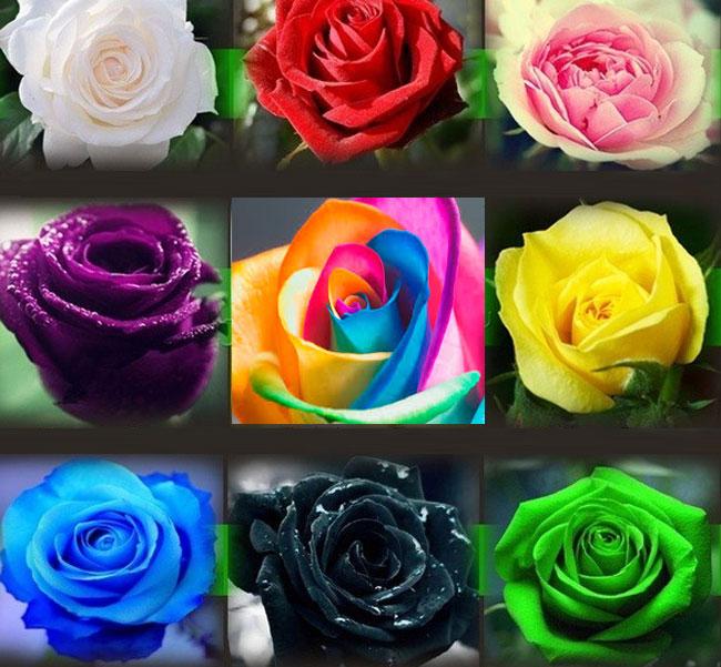 Rózsateszt! Válaszd ki azt a rózsát, amelyik első ránézésre megtetszett, majd ismerd meg jobban önmagadat!